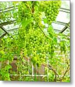 Grapevine Metal Print by Tom Gowanlock