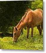 Grazing Horse Metal Print by Charuhas Images