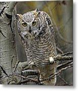 Great Horned Owl Pale Form Kootenays Metal Print by Tim Fitzharris
