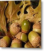 Green Acorns And Oak Leaves Metal Print by Jennifer Holcombe