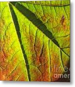 Green Days Past Metal Print by Trish Hale