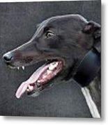 Greyhound Dog Portrait Metal Print by Ethiriel  Photography