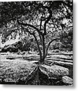 Grown Into The Rock Metal Print by Lisa  Spencer