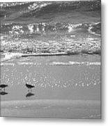 Gulls Taking A Walk Metal Print by Cindy Lee Longhini
