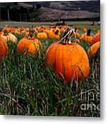 Halloween Pumpkin Patch 7d8405 Metal Print by Wingsdomain Art and Photography