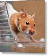 Hamster Metal Print by Tom Gowanlock
