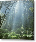 Hawaiian Rainforest Metal Print by Gregory Dimijian MD