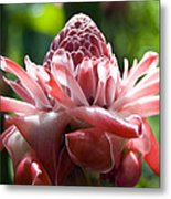 Hawiian Mystery Flower Metal Print by Chris Ann Wiggins