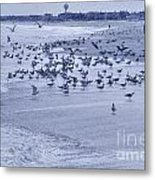 Hdr Seagulls At Play In The Sand Metal Print by Pictures HDR
