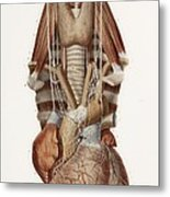 Heart And Neck, Historical Illustration Metal Print by