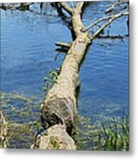 Herrick Lake Metal Print by Todd Sherlock