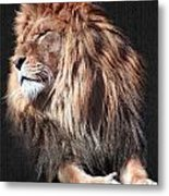 His Majesty Metal Print by Bill Stephens