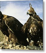 Hooded Eagles Stand Ready For Hunting Metal Print by Ed George