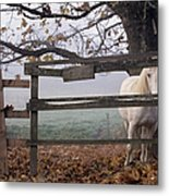 Horse At Fence Metal Print by Jim Corwin and Photo Researchers