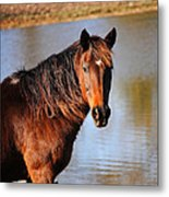 Horse By The Water Metal Print by Jai Johnson