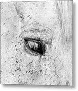 Horse Eye Metal Print by Darren Fisher