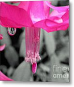 Hot Pink Cactus Metal Print by Kaye Menner