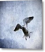 Hovering Seagull Metal Print by Carol Leigh