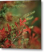 Huckleberry Leaves In Fall Color Metal Print by One Rude Dawg Orcutt