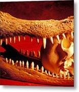Human Skull  Alligator Skull Metal Print by Garry Gay