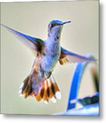 Hummingbird At The Feeder Metal Print by Shirley Tinkham
