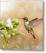 Hummingbird Hovering Metal Print by Sari ONeal
