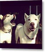 Husky Dogs Metal Print by Photography by Brandon Shepherd