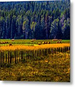 Idaho Hay Bales  Metal Print by David Patterson