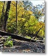 If A Tree Falls Metal Print by Bill Cannon