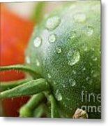Immature Tomatoes Metal Print by Sami Sarkis