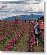 In The Tulip Fields Metal Print by Mike Reid