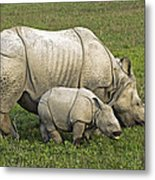 Indian Rhinoceroses Metal Print by Tony Camacho