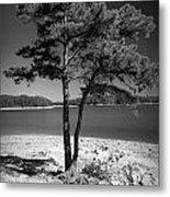Intertwined Metal Print by M Glisson