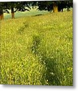 Ireland Trail Through Buttercup Meadow Metal Print by Peter McCabe