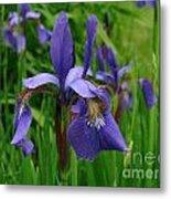 Irises Metal Print by Randi Shenkman