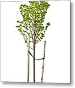 Isolated Young Linden Tree Metal Print by Elena Elisseeva