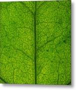 Ivy Leaf Metal Print by Steve Gadomski