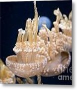 Jellies Metal Print by Carol Ailles