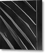 Just Grass Bw Metal Print by Heiko Koehrer-Wagner