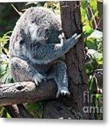 Koala Metal Print by Carol Ailles