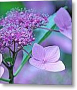 Lace Metal Print by Becky Lodes