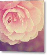 Ladybird On Camellia Metal Print by Photo - Lyn Randle