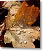 Leaf Doplets Metal Print by LeeAnn McLaneGoetz McLaneGoetzStudioLLCcom
