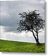 Leafless  Metal Print by Semmick Photo