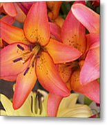 Lilies Background Metal Print by Jane Rix