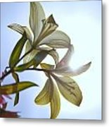 Lilies In The Sun Metal Print by Al Hurley