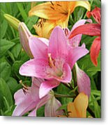 Lilies (lilium Sp.) Metal Print by Tony Craddock