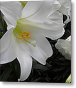 Lilies Metal Print by Silvie Kendall