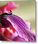 Lily's Drop Metal Print by Gulale