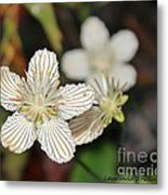 Little Wildflower Metal Print by Laurinda Bowling